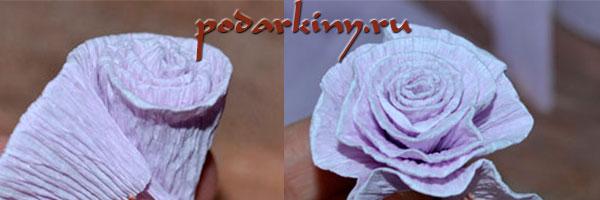 Скручиваем розу из гофрированной бумаги